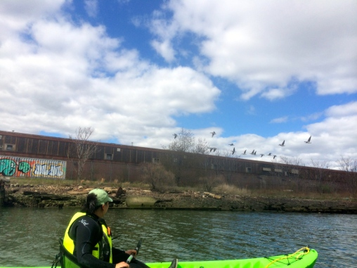 Operations Manager EJ Lee watches the Canada geese fly from the Bushwick Inlet, whose banks are covered in Bladderwrack