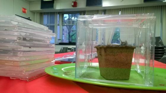 Cubed CD case mini-greenhouse. Photo by Erik Baard.