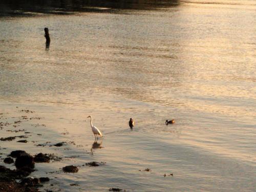 Waterfowl at Hallets Cove. Photo by Erik Baard.