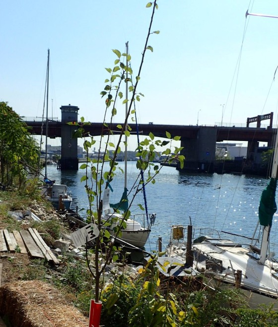 The HarborLAB GreenLaunch on the Newtown Creek.